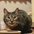 Photos: 家庭内野良猫の蒼