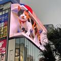 新宿東口の巨大猫