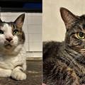 Photos: 老猫と若猫