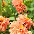 Photos: 虫と花