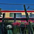 線路際の花