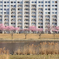 Photos: 旧中川