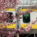 Photos: ピンクとレモン色