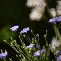 青紫色のお花