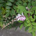 Photos: ピンク色のお花