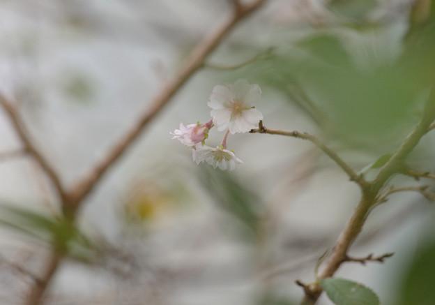 Photos: 秋霞