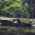 250TR 森と川