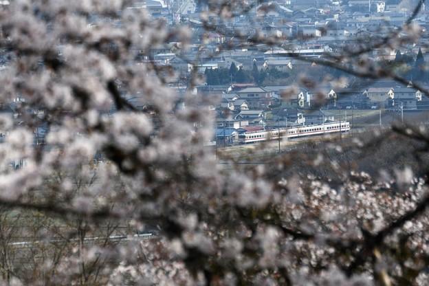 桜咲く鹿沼富士山公園から