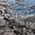 Photos: 桜咲く鹿沼富士山公園から