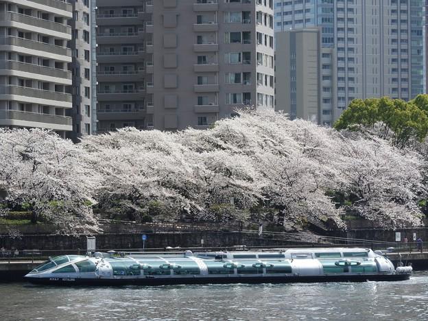 桜ホタルナ