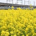 菜の花咲く宇都宮線