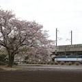 桜咲く宇都宮線を行くEF65 2094号機