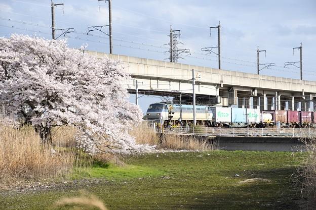 Photos: EF66 128牽引4093レ