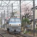 Photos: 春ひとり旅