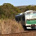 Photos: 烏山線ACCUM