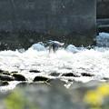 Photos: 急流を飛ぶ
