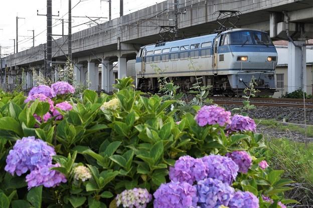 Photos: 紫陽花の宇都宮線を行くEF66単機