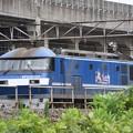 白帯桃太郎111号機