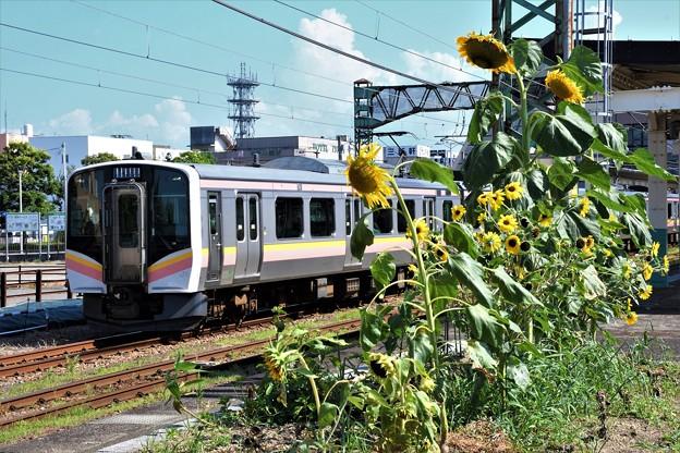 新津駅ホームの向日葵とE129系