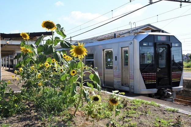 向日葵とGV-E400系