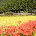 Photos: 彼岸花とスペーシア「日光詣」