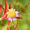 Photos: 小さい花に飛ぶ小さい虫