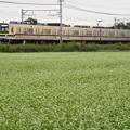 蕎麦の花咲く東武日光線20400型