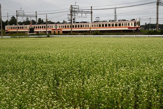 蕎麦の花咲く東武日光線6050型