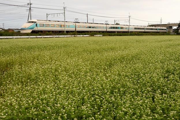 蕎麦の花咲く東武日光線スペーシア