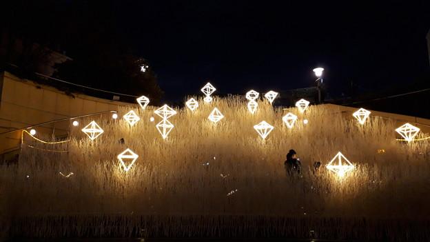 2018.12.19(大阪光の饗宴/なんばパークス/煌めく草原2)