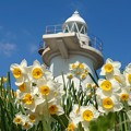 Photos: 灯台の春