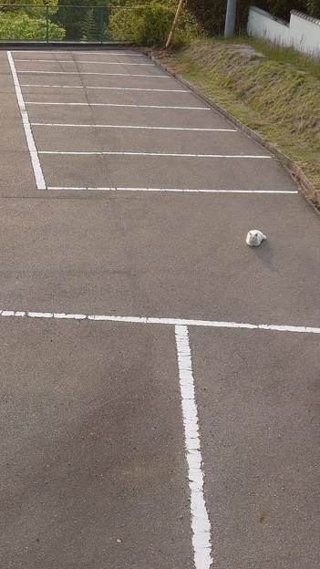 ちゃんと駐車スペースに停めてください