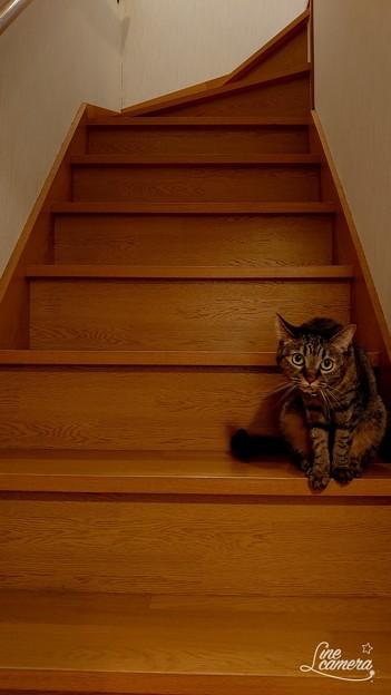 階段 ネコがおんねん