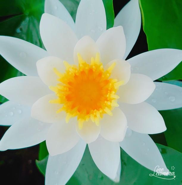 水の花びら