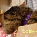 Photos: あれれ~?