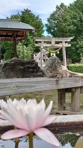 岩に染み入る猫の・・・