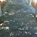 Photos: 木漏れ日の小道