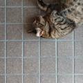 Photos: 昼下がりのだらけネコ