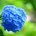 210530_03A_紫陽花咲く・RX10M3(多摩川台) (175)