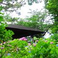 210530_03A_紫陽花咲く・RX10M3(多摩川台) (328)