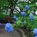 Photos: 210601_09A_紫陽花・RX10M3(多摩川台) (45)