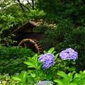 210622_16A_紫陽花・RX10M3(府中郷土の森) (29)