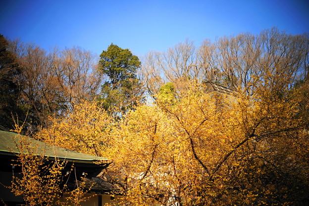 210129_11R_蝋梅のお寺・RX10M3(西方寺) (96)