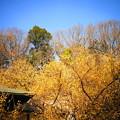 Photos: 210129_11R_蝋梅のお寺・RX10M3(西方寺) (96)