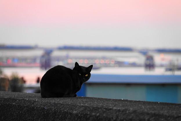 Photos: 201222_62K_黒猫・RX10M3(六郷川河口) (9)