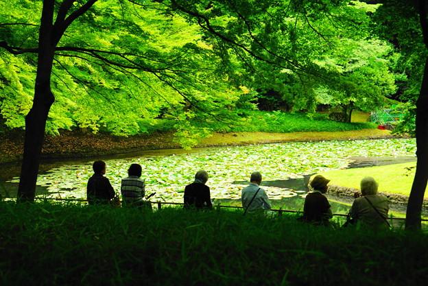 190605_39T_庭園の様子・S18200(小石川後楽園) (48)
