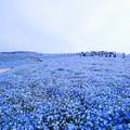 Photos: 210425_03N_みはらしの丘・S1018(ひたち海浜公園) (151)