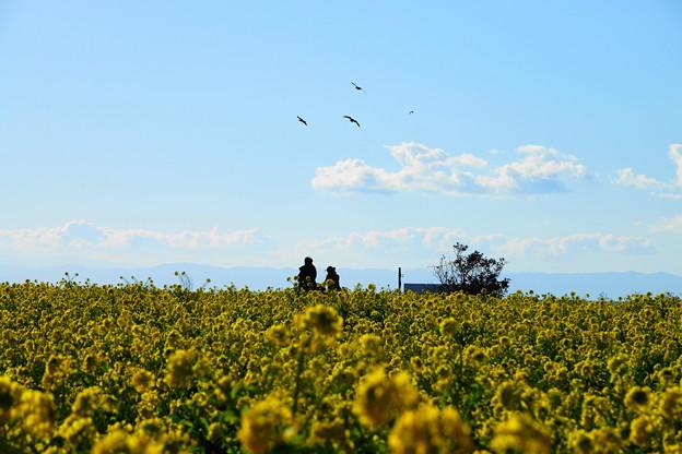 210102_29N_菜の花畑で・RX10M3(ソレイユの丘) (4)