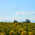 Photos: 210102_29N_菜の花畑で・RX10M3(ソレイユの丘) (4)