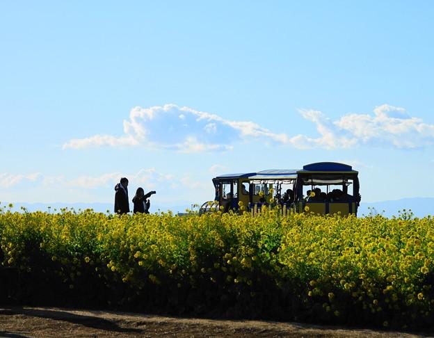 210102_25N_菜の花畑で・RX10M3(ソレイユの丘) (86)
